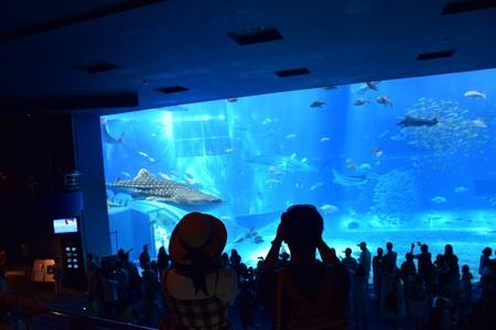 沖縄美ら海水族館①170714.jpg