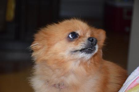 犬②150110.jpg