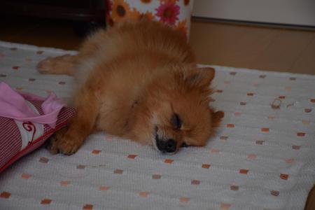犬③150110.jpg
