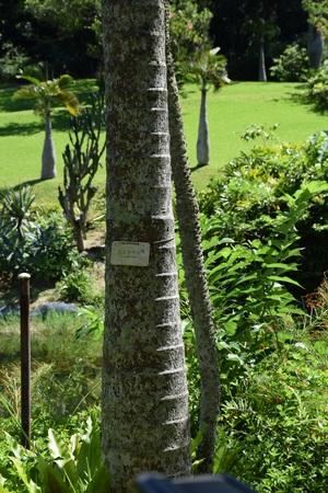 ヤシの木②170714.jpg