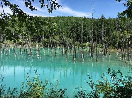 青い池①170808.jpg